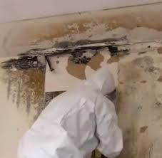 Mold Removal Gunter Tx