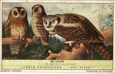 Owls from Liebig advertising cards