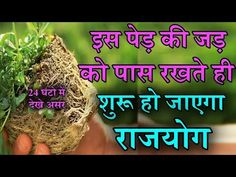 Vedic Mantras, Hindu Mantras, Camphor Uses, Tips For Happy Life, Buddha Home Decor, Hindu Quotes, Lucky Plant, Positive Energy Quotes, Success Mantra