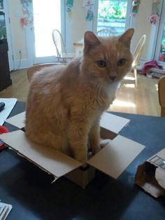 Cat +box =otp