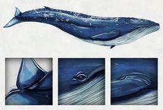 Ilustraciones Antonia Lara