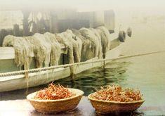 CORALLO CORALLI domande frequenti Come conservare il corallo Come pulire o lucidare il corallo Come vedere il valore del corallo PESCA CORALLINE E CORALLI COSA SONO I Il corallo del Mediterraneo Il corallo di Sciacca Il corallo del Giappone Coralli del pacifico