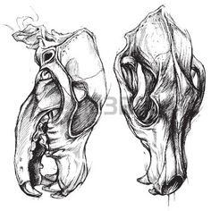 Ideas tattoo dog skull for 2019 Animal Skull Drawing, Animal Skull Tattoos, Animal Skulls, Dog Tattoos, Animal Drawings, Bear Skull, Dog Skull, Skull Art, Tattoo Studio
