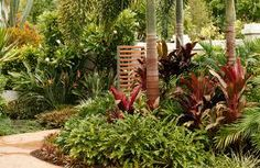 landscape design tropical garden - Google Search