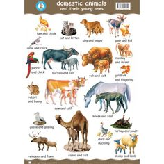 pictures of farm animals and their young ones Young Ones Of Animals, Animals For Kids, Baby Animals, Deep English, English Time, Learn English, Farm Animals List, Animals Name In English, Geography Map