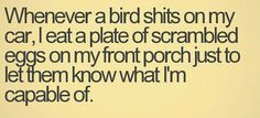 don't fuck with me, birds.