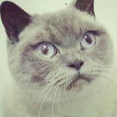 My Beautiful cat Aslan :-)
