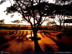 Shadows..! - Photography by Shashank Shekhar at touchtalent