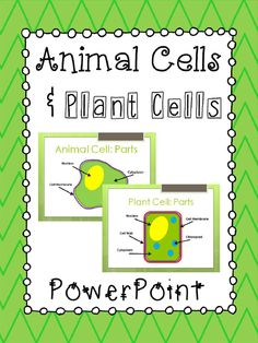 Animal Cells & Plant Cells PowerPoint Presentation. Compares and describes the function of the major parts of each type of cell. Aligned with 5th Grade Science standards in Georgia. 100% Editable!