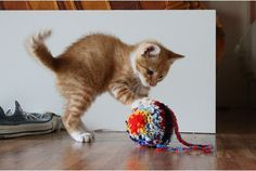 cute ginger tabby kitten playing with yarn