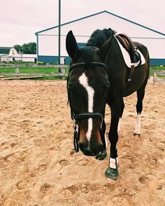 Did you hear about our Halloween sale? From now until the get off all o… Did you hear Cute Horses, Pretty Horses, Animals And Pets, Cute Animals, Halloween Sale, Horse Girl, Horse Tack, Big Dogs, Horse Riding