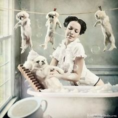 39 best pegatinas images on pinterest stickers dog grooming 34 photo manipulation grooming shoppet solutioingenieria