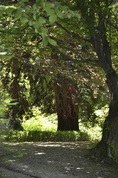 In the wood of Fontenefredda-Serralunga-Langhe
