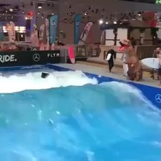Just A Surfing T-Rex. Nothing Special.