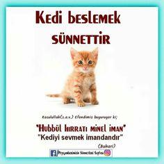 Allah Islam, Islam Quran, Muslim Pray, Cute Baby Girl, Cute Cats, Religion, Prayers, Messages, Quotes