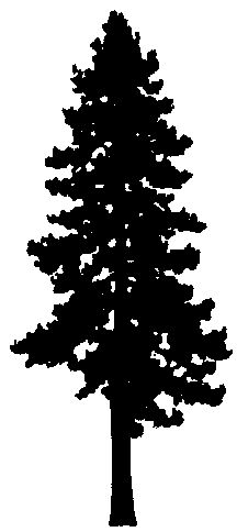 pine tree silhouette clip art cliparts accent wall mural rh pinterest com pine tree clip art royalty free pine tree clipart png