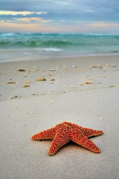 Welcome to Destin,Destin,Destin Florida,Destin FL,Destin FLA,The Emerald Coast,The Florida Panhandle,Starfish,starfish on the Beach,Panhandle Beaches,Gulf Of Mexico,Gulf