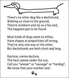 DACHSHUNDS - No other dog like 'em!