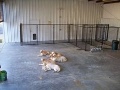 """We have a """"doggy door"""" that allows the dogs to access a climate controlled interior."""