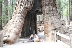 Come walk with me.........Rest and relaxation at Mariposa Sequoia Grove