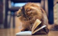 Мир Ирины Лем: Эти милые коты не позволят вам читать в одиночестве