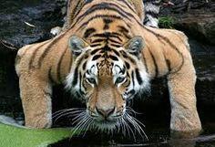 tierfotos tipps - Google-Suche Tier Fotos, Andrea Berg, Animals, Archery, Eye, Classic, Google, Blog, Inspiration