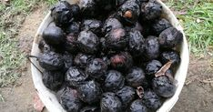 Blueberry, Fruit, Plants, Gardening, Dios, Berry, Lawn And Garden, Plant, Blueberries