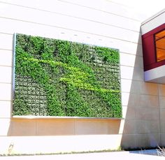 Green Wall by Ambius