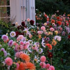 Dahlia border at the Dorset home of Charlie McCormick and Ben Pentreath Cut Flowers, Pretty Flowers, Wild Flowers, Flowers Nature, Cut Flower Garden, My Flower, Dream Garden, Garden Inspiration, Dahlia