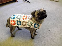 It looks like dogs like granny squares! Busters new crochet dog coat!
