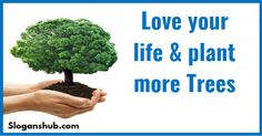 Best save tree slogans that will . Life without trees is not . We have to act now to save the precious . Tree Planting Quotes, Save Trees Slogans, Tree Slogan, Tree Quotes, Plants Quotes, Love Your Life, Trees To Plant, Best Quotes, Herbs
