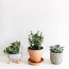 Cute planters for the kitchen!