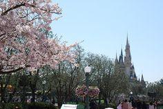 Tokyo Disneyland in Spring