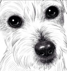 How to draw dogs step by step?   Now we will see how to draw a small dog with a pencil in stages, step by step. We will need a pencil and eraser. What a breed I do not know, who knows, please write in the comments, then I will fix the article.       … … Continue reading →
