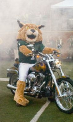 Rufus the Bobcat, Ohio University (where I go to school)