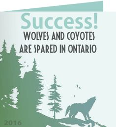 Barbara F. just received a Care2 Thank You Note For Success! MNRF Abandons Plan To Limit Rules On Killing Ontario Wolves and Coyotes!
