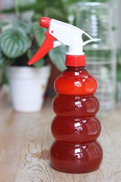 Toxic sprays might eliminate garden pests, but they are harmful to you and the environment. Instead, try whipping up one of these…