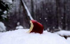 Kevin Ekelmans- Bitten Apple in the Snow
