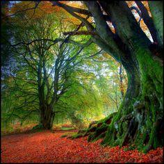 Autumn in Scotland.