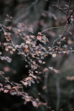Photo by Annie Spratt on Unsplash Blur Image Background, Blur Background Photography, Desktop Background Pictures, Light Background Images, Studio Background Images, Picsart Background, Photo Backgrounds, Sky Photoshop, Blue Flower Wallpaper