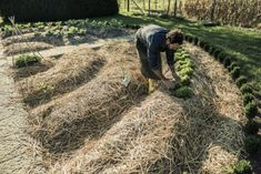 Best Vegetable Mulch: Learn About Mulch For Vegetable Plants - Organic and inorganic mulches are available as vegetable garden mulch options. But which is the best vegetable mulch? Learn the different types in this article and their attributes to help you make an informed decision on mulch for vegetable plants.