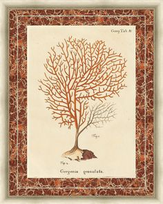 Gorgonia Granulata Marble Framed Painting Print