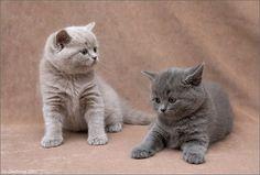 Cute Little Kittens | Funtasticus.com Humor & Fun Blog