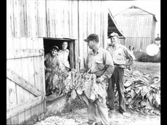 """Roseville"" is a musical play about the last harvest on a North Carolina tobacco farm in the early 1970s.   The family that's worked and lived on the farm for generations divides over their future, as some members resist the social and economic changes that are transforming their world, while others embrace them.  Competing dreams and divided lo..."