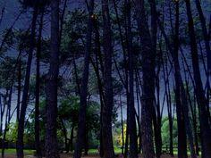 El bosque de la noche