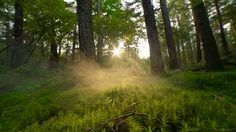 cinemagraph gif nature photography cinemagraph smoke forest trees woods cinemagraphs sunrise magical dawn fog mist mos