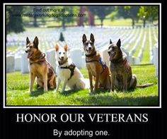 Honor Our Veterans by Adopting One: Adopt a  Military War Dog.