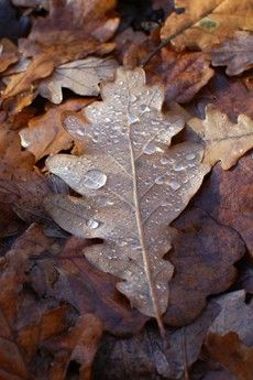 dew on a leaf : Hannah Nunn