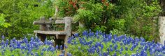Great wildflower index