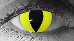 Yellow Cat Halloween Contacts. $49.90 pair, prescrition